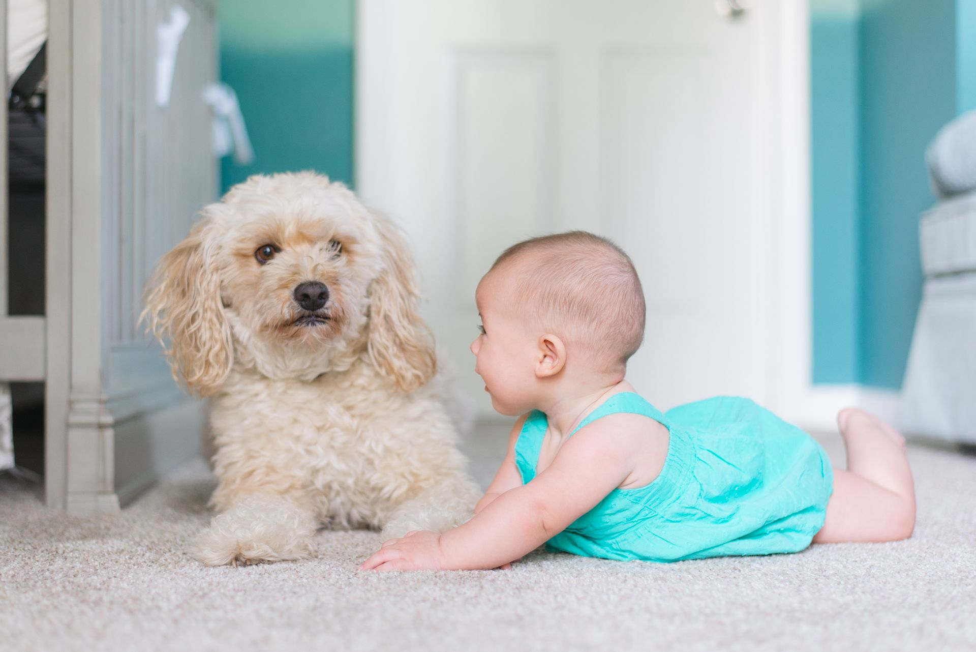 The Pro's in Carpet cleaning services. If your home carpet has pet orders call us to leave your home smelling fresh again.